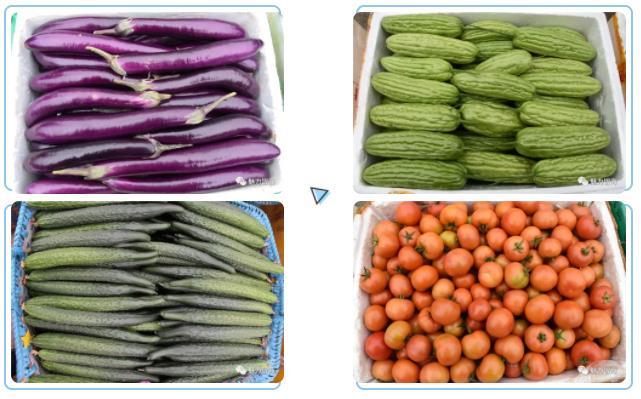 北海多名菜农捐赠7000公斤果蔬,助力抗疫